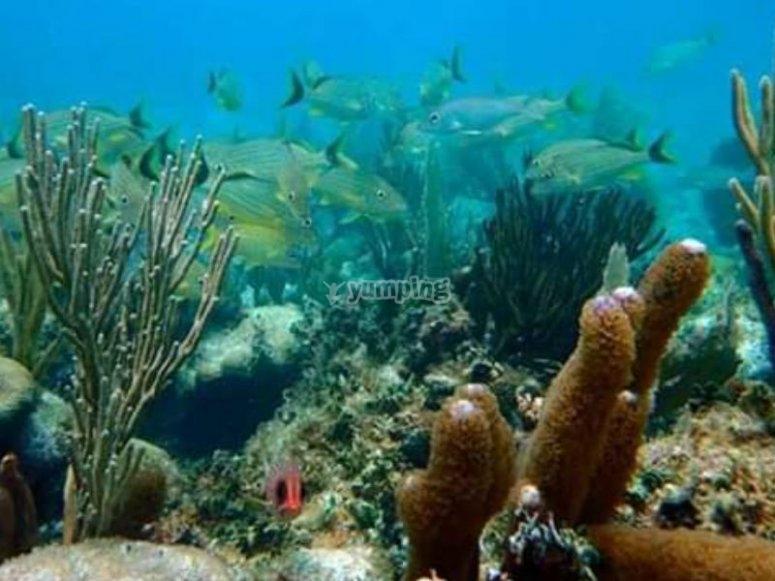 Espectaculares arrecifes del caribe mexicano