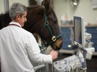 Health of the horses