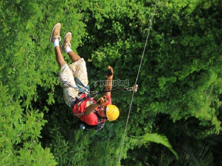 Ziplines among trees
