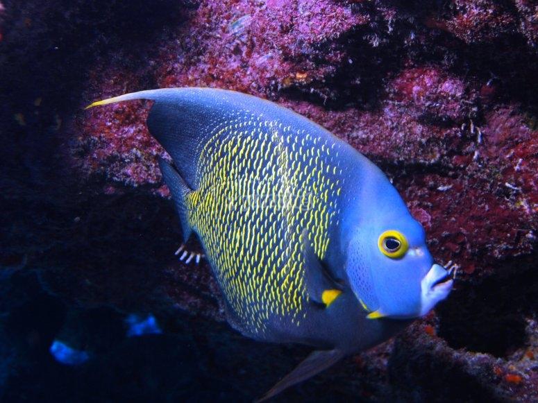 Admira el color de los peces