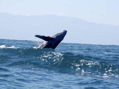 Sayulita Entourage Whale Watching
