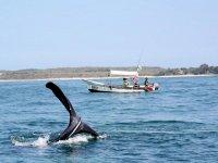 Ballenas en el mar