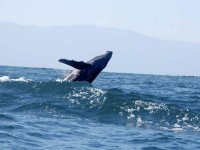 Salto de ballena en el mar