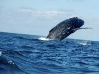 Tour para ver ballenas