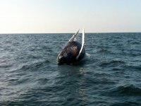 Ver ballenas en vivo