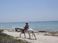 Horses for excursions