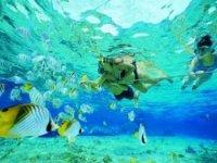 Snorkel in Vallarta