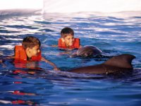 dolphins in vallarta