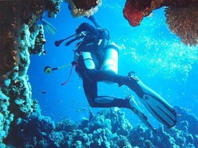 Luna Sea Charters Buceo