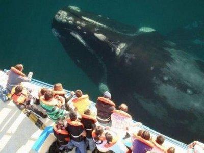 VIP Access Promotion Vallarta Whale Watching