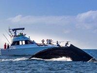Whale Whatching in Mazatlan