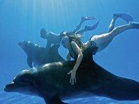Dolphin program