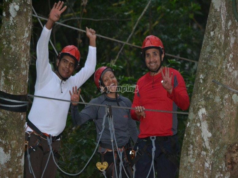 Climb the trees