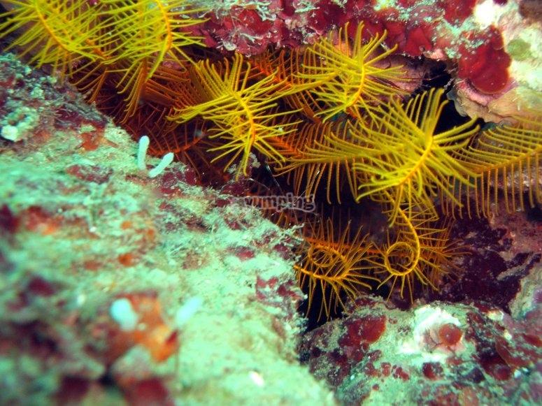 Enjoy exploring the world under the sea