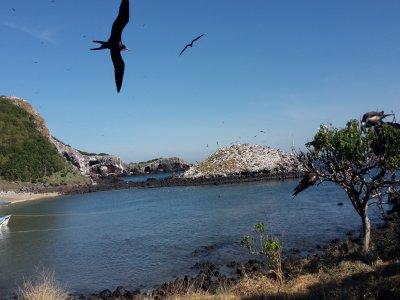 Diving tour Isla Isabel, Nayarit