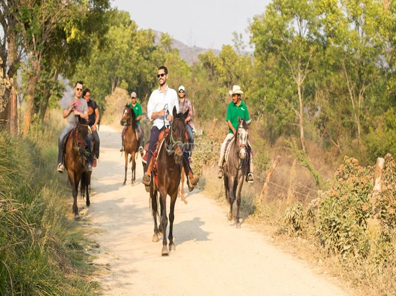 Horse riding on the trails