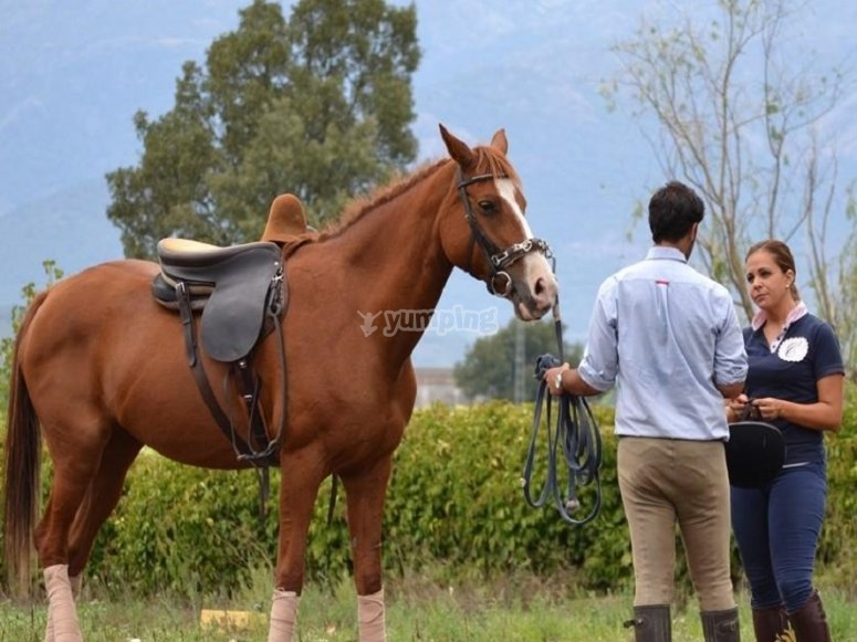 Sports riding lessons