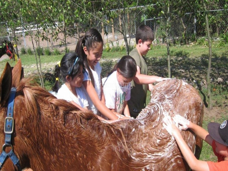 Soaping the horse