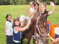 Bathing the horse