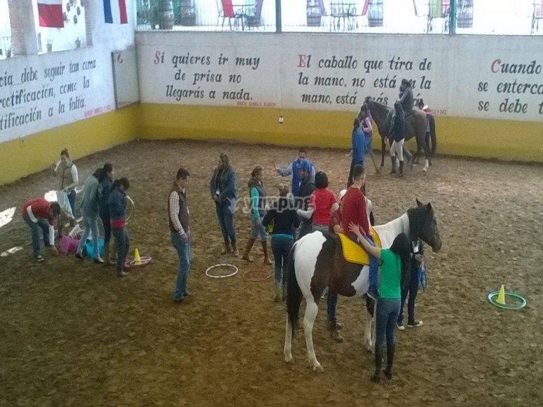 Dynamic horses lessons