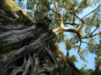 Trees in the Huasteca