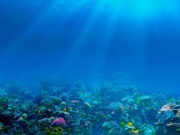 Caribbean Sea Reef