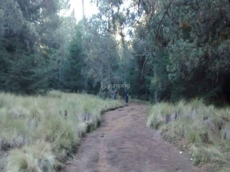 El sendero por el parque nacional