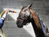 Cleaning the horse