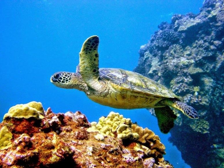 Tortugas en el mar