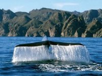 Awesome whale tail