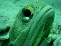 Marine fauna that you will see in diving