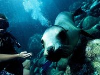 Seeing seals while diving