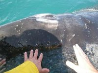 You can touch whales