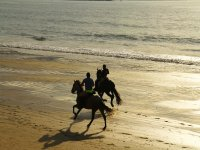 Galloping on the seashore