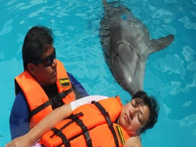 Activity with dolphins at Guanajuato 25 min