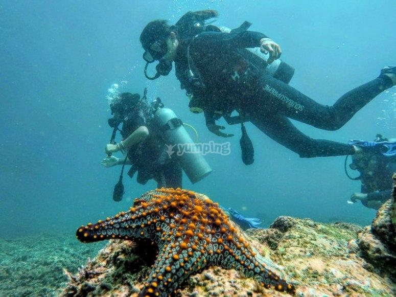 Descubre la maravillosa vida marina de Ixtapa con tu curso AOWD