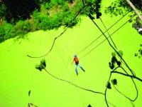 Circuito canopy en nayarit