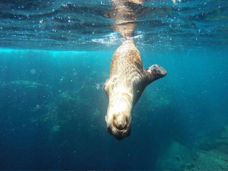 Sea lions of the island