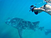 Snorkel con el tiburon ballena en La Paz