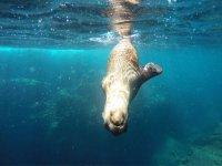 Snorkel en la Isla del Espiritu Santo