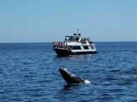 Whale watching in the sea of ​​cuts