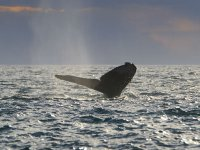 Whales in Baja California