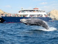 Encontrando ballenas