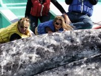 Acariciando la ballena