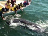 Cerca de las ballenas en barca
