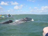 Excursion entre cetaceos