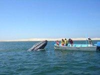 Frente a la ballena