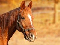 Increibles caballos