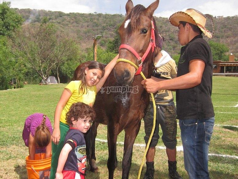 Interaccion con los caballos