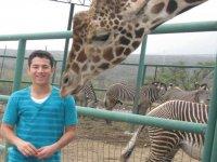 With giraffes